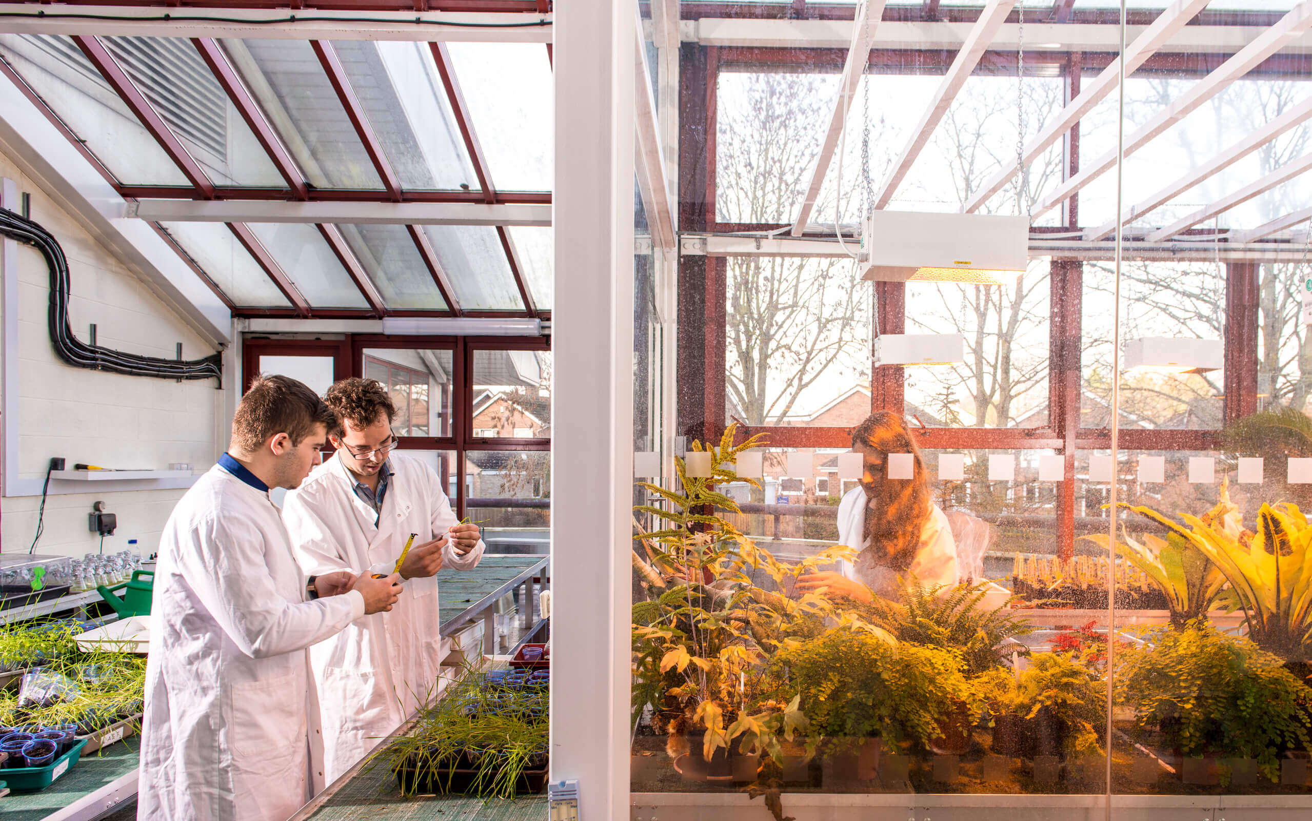 Students undertaking experiments in the glasshouse