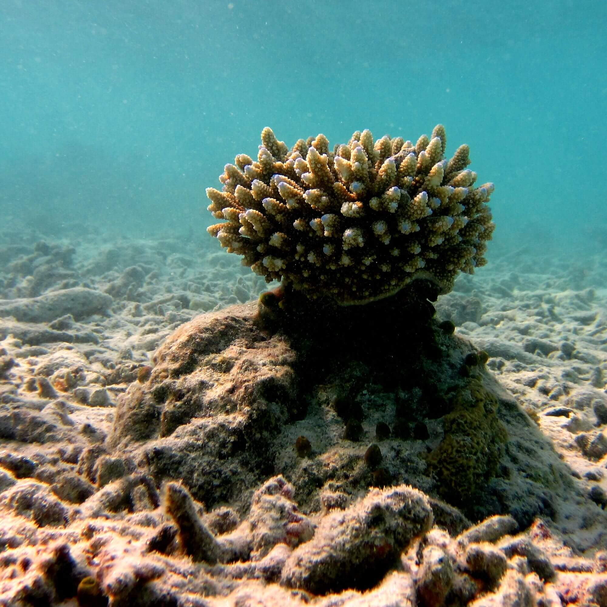 Image of coral reef on the sea bed.