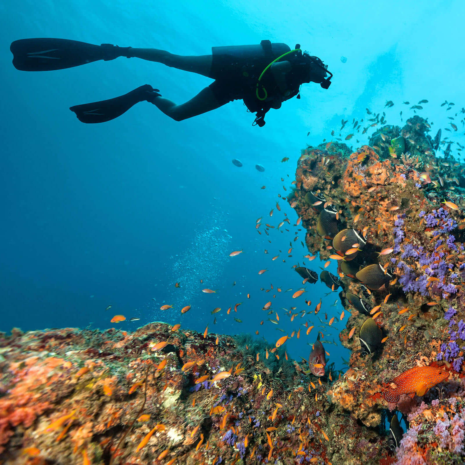 diver among the coral