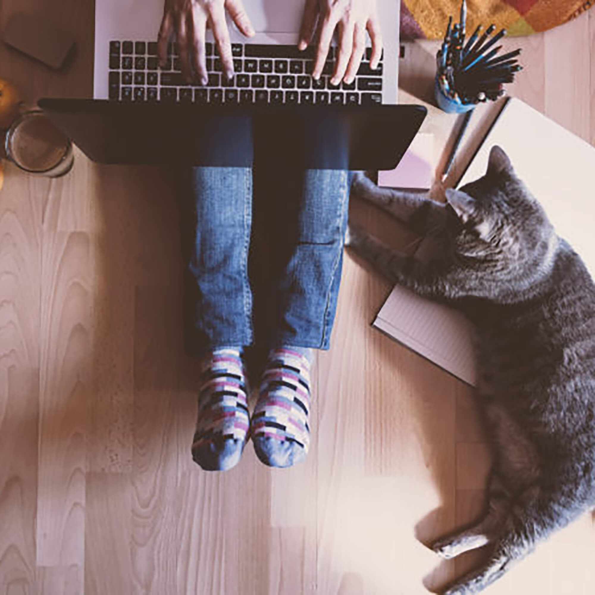 A student sitting on the floor typing into a laptop with a cat lying beside them